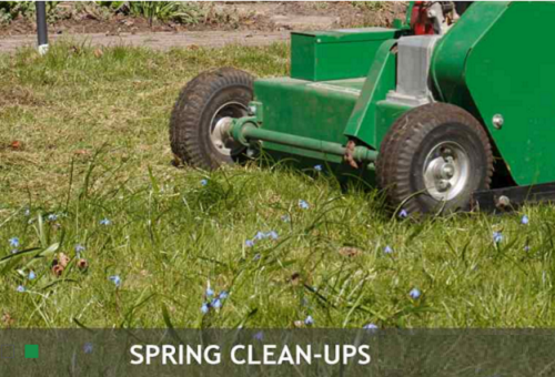 Importance of Spring Clean-up for Your Lawn