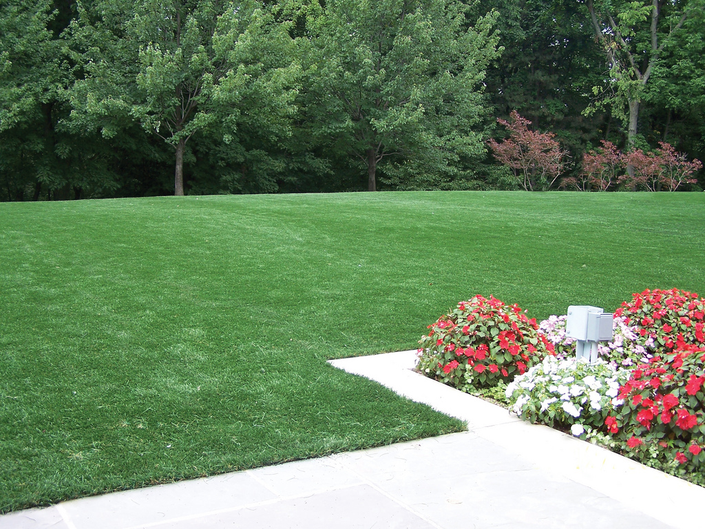 Photo source: ForeverLawn