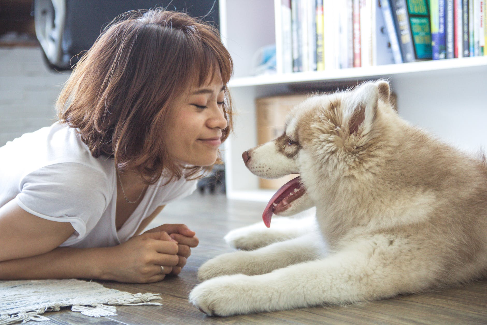 Choosing Pet Friendly Flooring Options