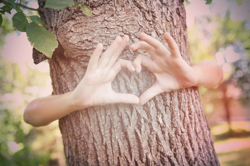 Childs hands making a heart shape on a tree trunk. Instagram effect
